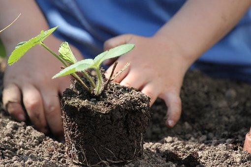 4 raisons séduisantes de cultiver vos propres plantes