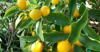 5 façons dont les citrons peuvent totalement sauver votre santé mentale.