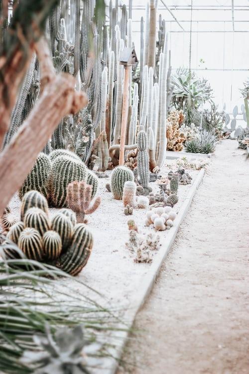Comment créer un magnifique jardin d'hiver
