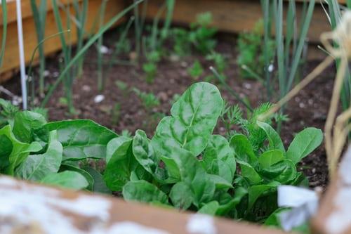Comment donner à un petit jardin un aspect plus grand : Un guide simple