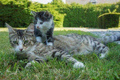 Guide de soins pour chats - Comment choisir la bonne nourriture pour chats ?