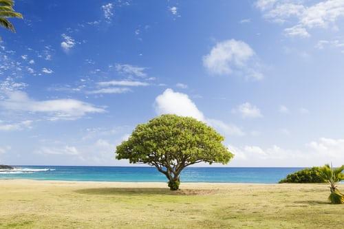 Réfléchissez-y : Quels sont les pires arbres à planter ?