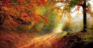 Rester en bonne santé pendant la transition vers l'automne