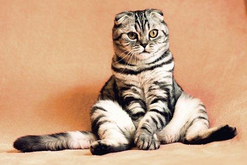 Vous avez sauvé un chat errant ? Voici comment régler le sort du nouveau venu