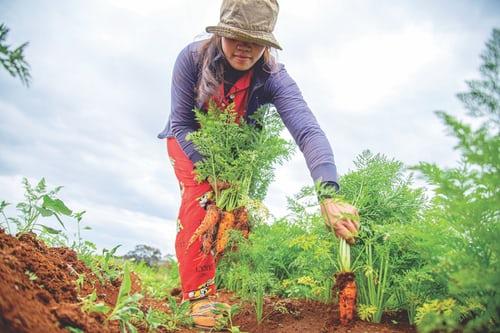 Transformez votre jardin de style en un jardin de substance... Rendez-le comestible.