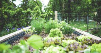 L'agriculture urbaine est la clé d'un avenir durable