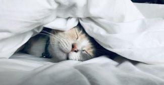 Qu'est-ce que le sommeil idéal